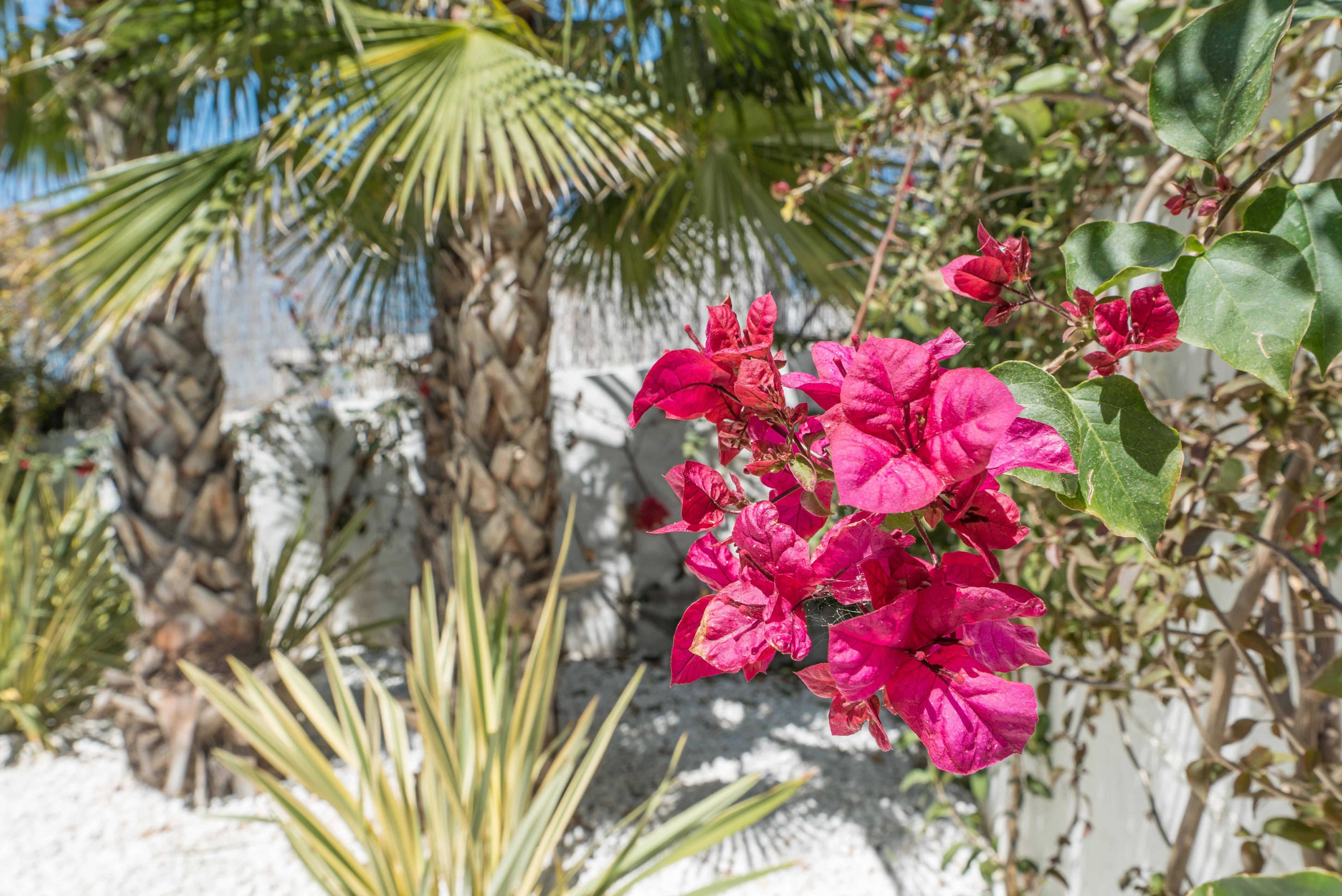 VILLA VALERIA - Garden (4)